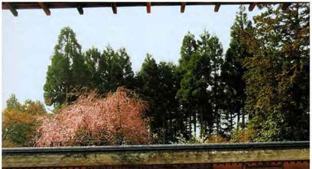 The Japanese Dry Landscape Garden