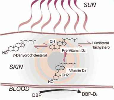 Sunlight And Vitamin Production